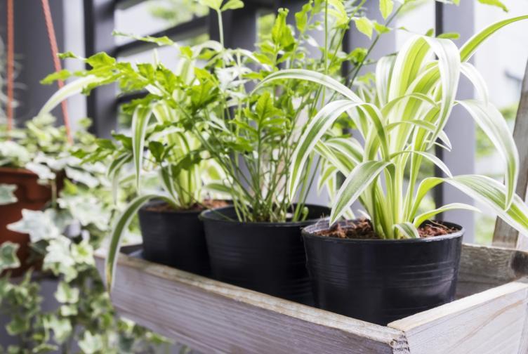 растения дом въздух