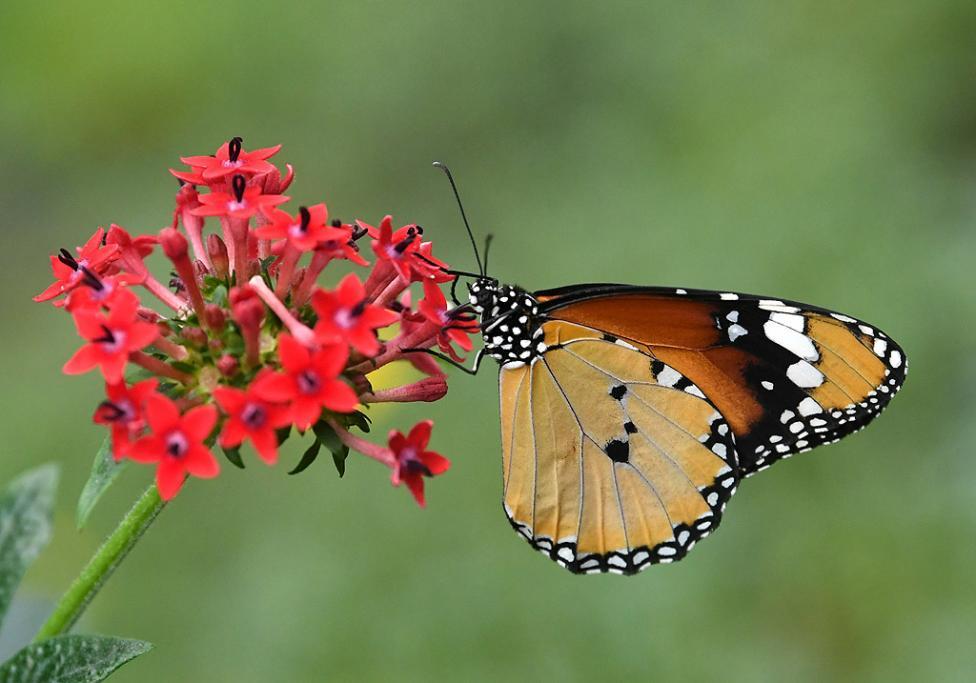 - Изложба на пеперуди в Природонаучния музей в Лондон, Великобритания. Изложбата ще продължи до 16 септември 2018 г.