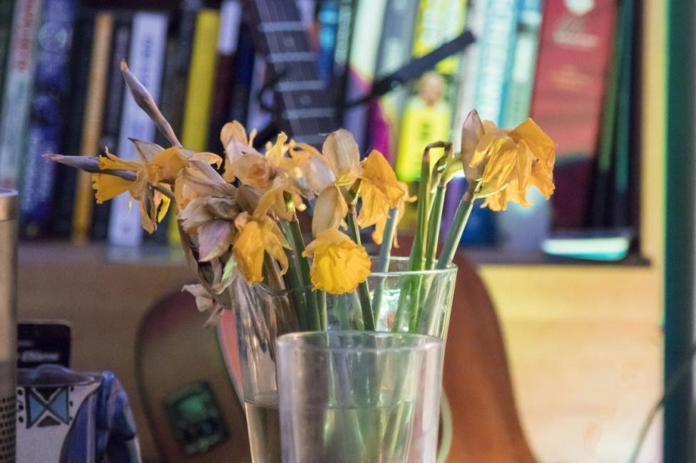 - 1. Увехнали цветя - подобно на изкуствените цветя, според фън шуй мъртвите растения в дома носят лош късмет.