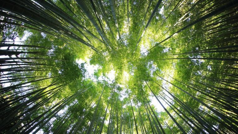"""Силвотерапия или """"горска баня"""": Вижте как гората лекува"""