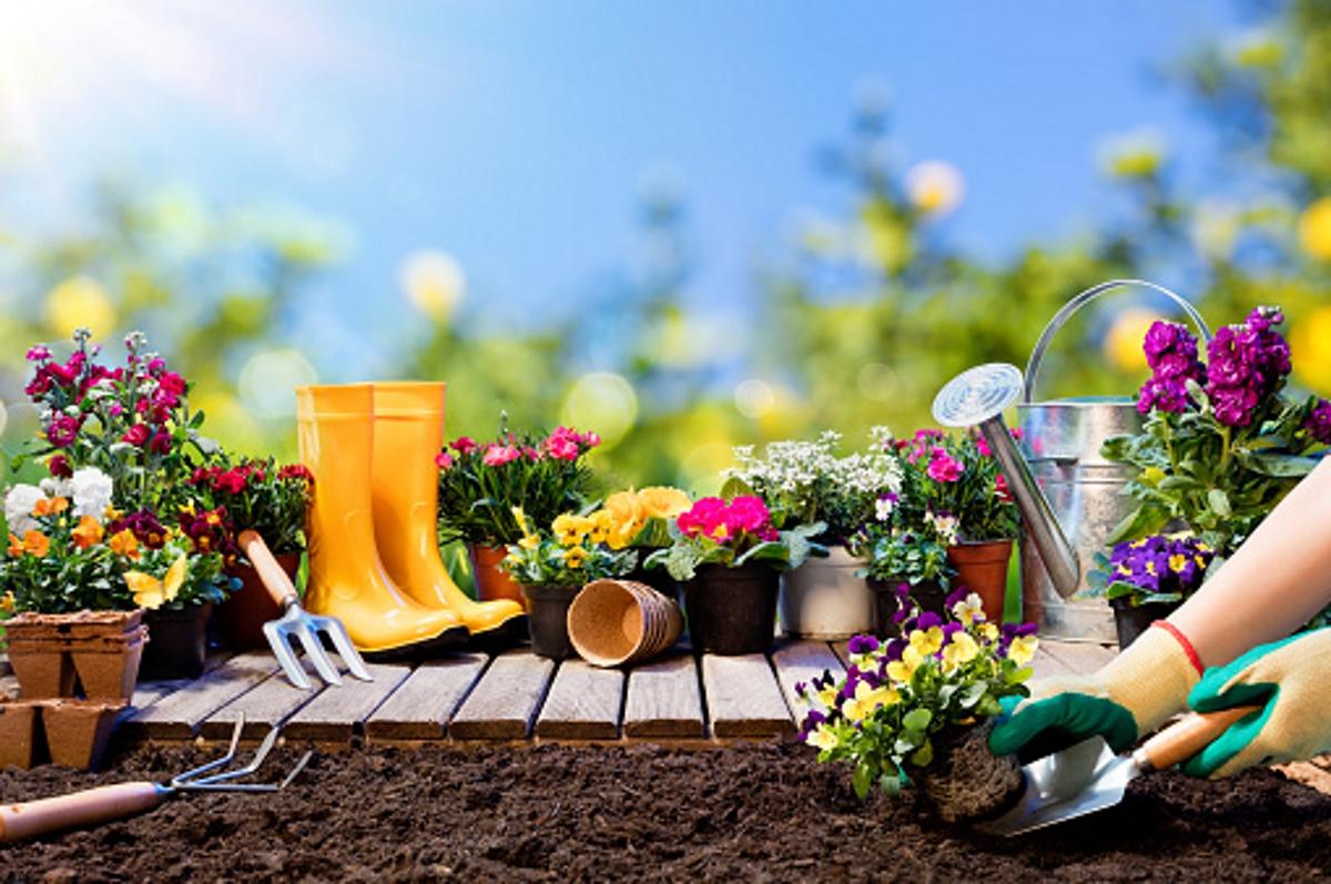 Отново в двора: погрижете се за градината. Изчестете и подгответе всичко необходимо за летните растения.
