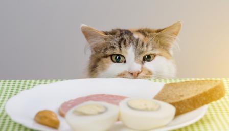 Никога не давайте тези храни на котката си (СНИМКИ)