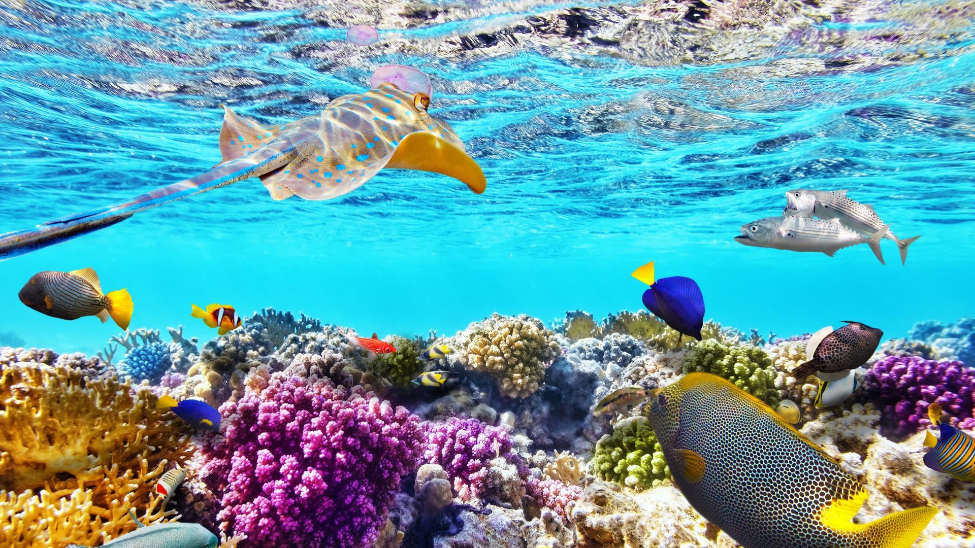 риф море океан
