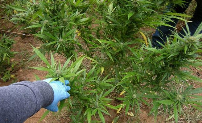 Наркотиците в Европа: все повече, все по-достъпни, все по-смъртоносни