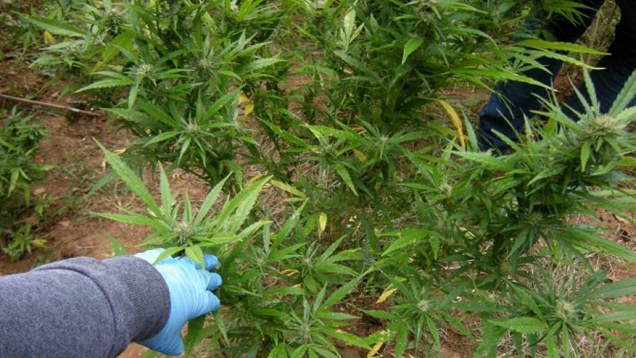 Наркотиците: все повече, по-достъпни, по-смъртоносни