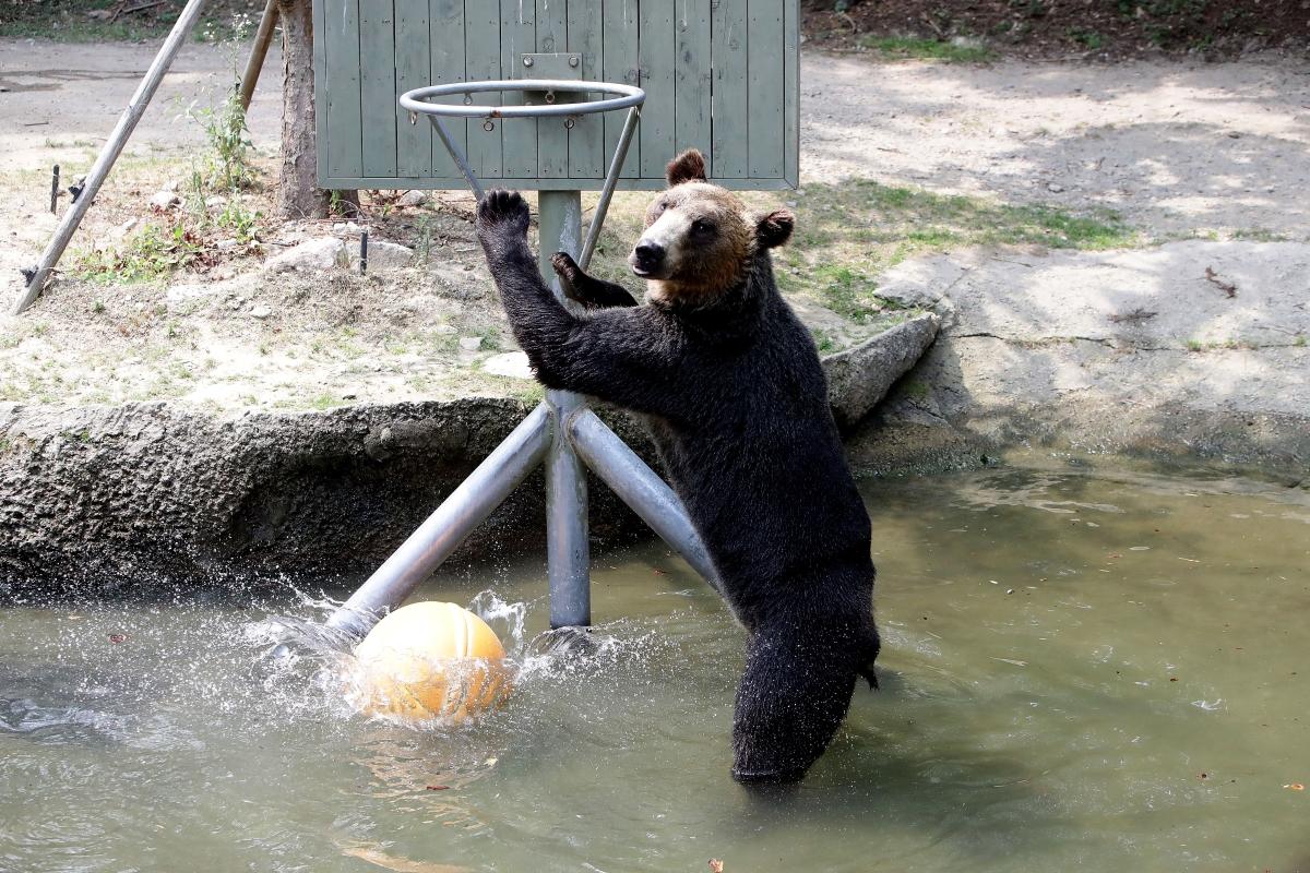 Кафявите мечки пък предпочитат оралната любов и обичат да си я дават по много. Толкова много, че учени в Хърватска, които наблюдавали двойка мечка установили, че те го направили 28 пъти за 116 часа.