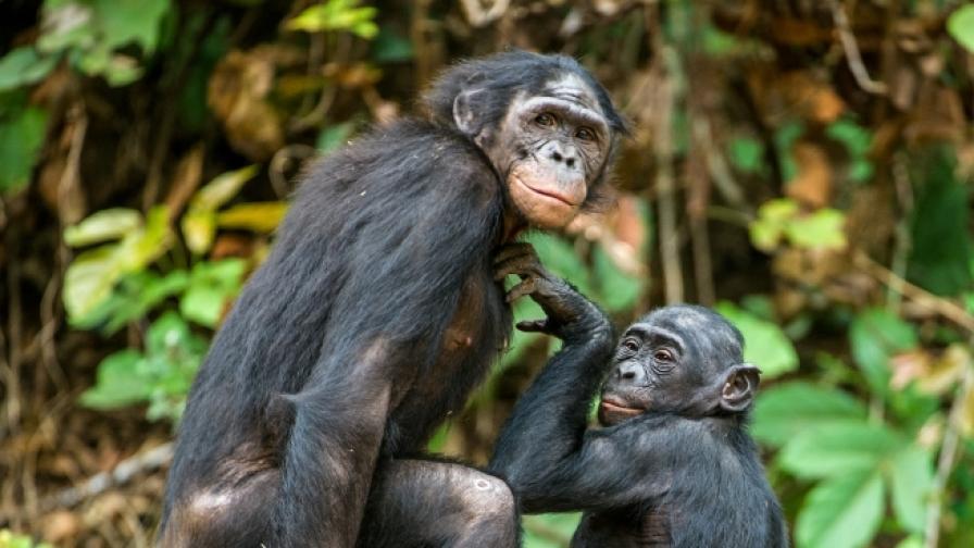 <p>Кои са секс маниаците на дивата природа (СНИМКИ)</p>