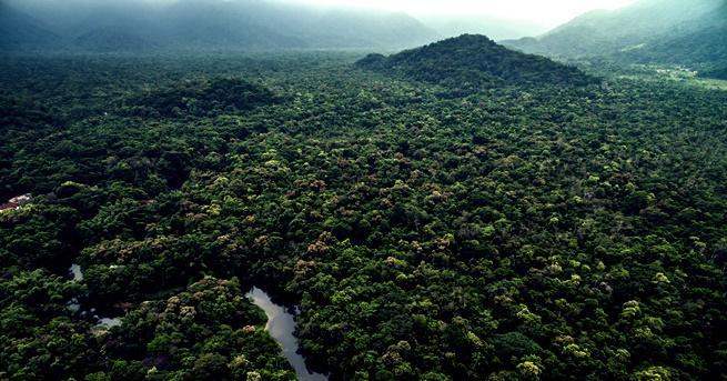 Снимка: Чудовището, за което се смята, че обитава Амазония