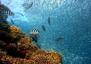 Кораловите рифове ще потънат
