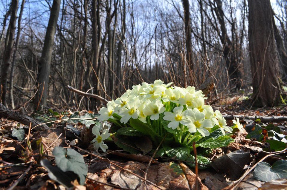 билки цветя гора
