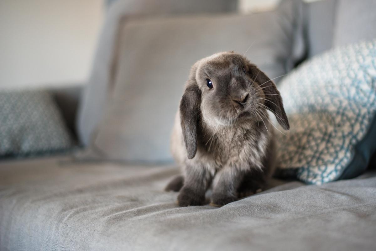 """Древно поверие, което идва от Великобритания твърди, че ако първата дума, която кажете на първото число от месеца е """"rabbit"""" (заек), повторена два пъти и последното, което кажете преди да заспите е """"tabbar"""", (заек на обратно), отново два пъти, ще имате невероятен късмет."""