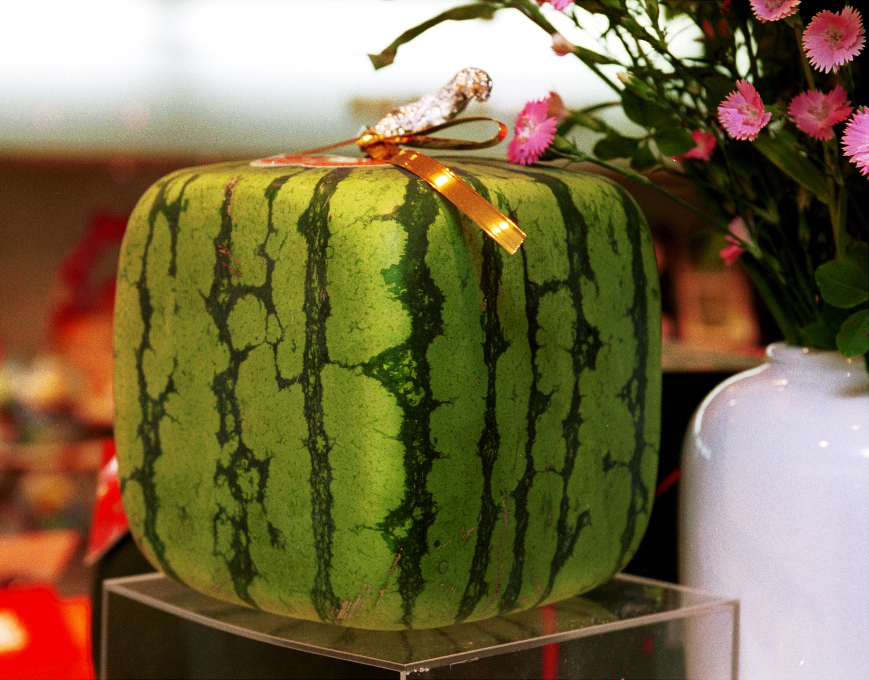 Опашката на плода, ако не е отрязана, е друг индикатор за зрялост. Тя трябва да е добре изсъхнала и кафява.