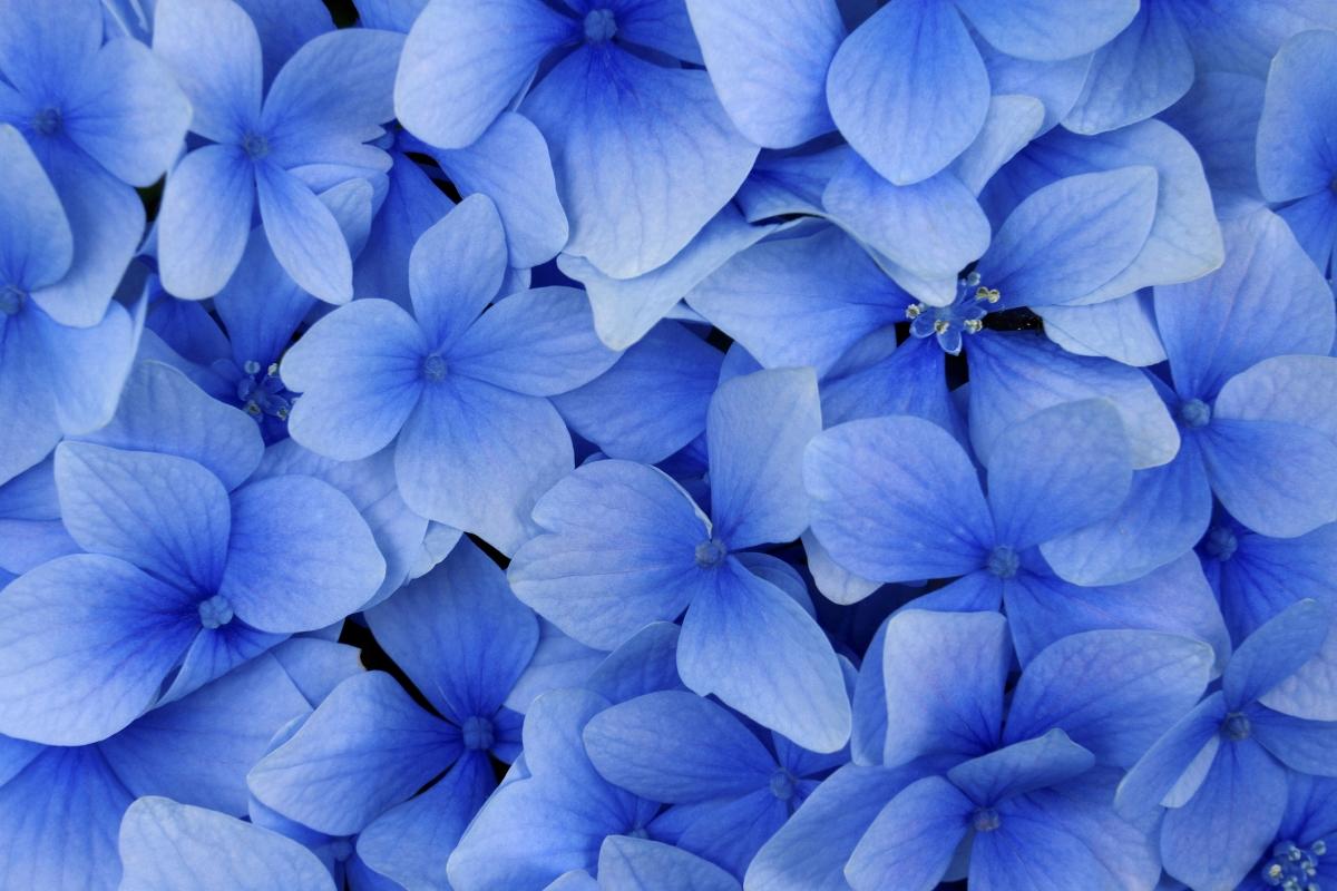 Синьо: означава, че сте на етап, в който трудно взимате емоционални решения. Разумът преди всичко.
