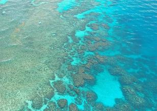 Идеи за спасяването на Големия бариерен риф