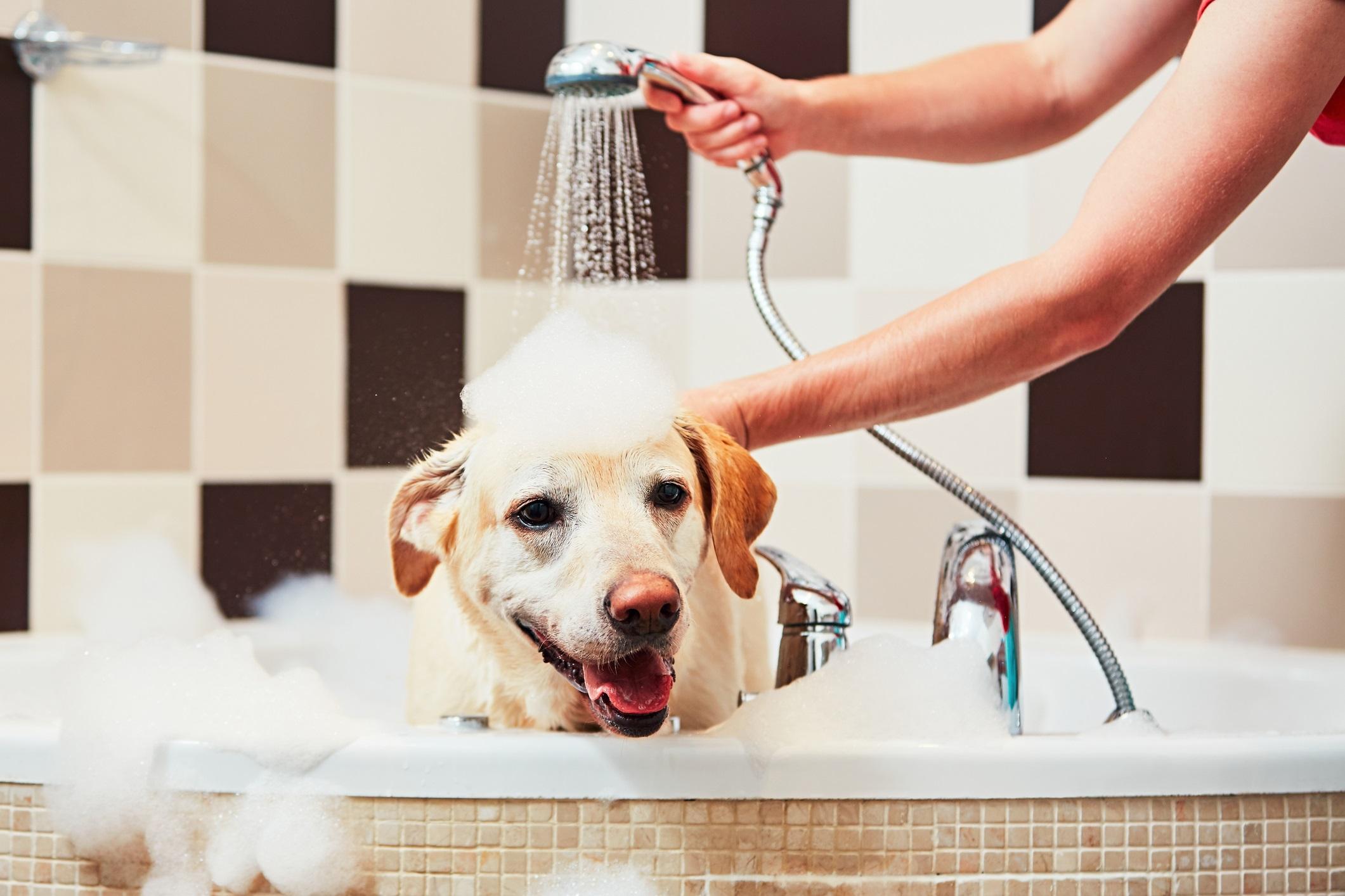 <p>Домашният любимец няма място в спалнята<br /> <br /> Ако имате домашен любимец, време е да спрете да го пускате в спалнята ви. Освен това трябва редовно да се грижите на хигиената на домашния любимец. Не забравяйте редовно да решите кучето или котката навън, така ще намалите количеството козина, което пада в дома ви. Когато купете домашния любимец използвайте хладка вода, защото топлата изсушава кожата и предизвиква лющене. Почиствайте леглото на домашния любимец редовно с гореща вода.</p>