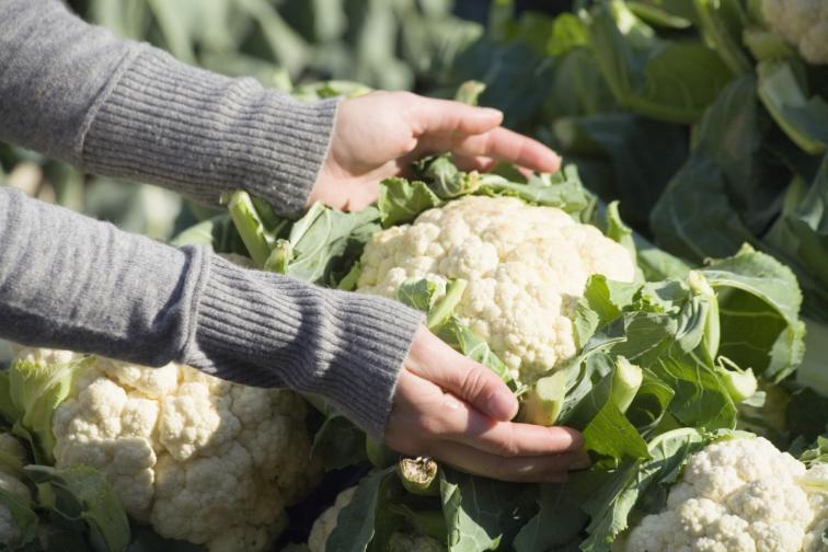 растения зеленчуци засаждане храни
