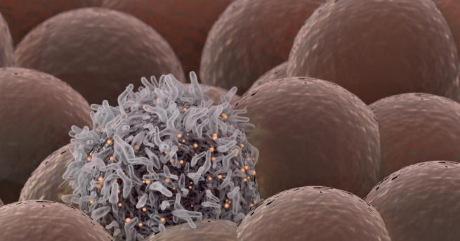 Клетки в тялото ни умират през цялото време, а сега