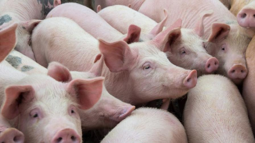 Отпадна забраната за свинското от 39 ферми в България