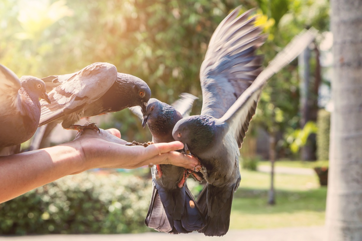 Във Венеция от 2008 г. е в сила забраната за хранене на гълъбите.