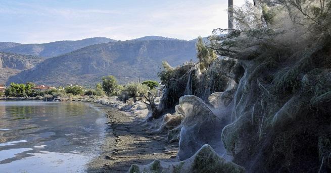 Зловеща паяжина обхвана цял бряг в Гърция. По-топлите климатични условия