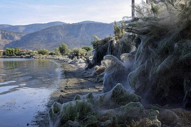 Грандиозна 300-метрова мрежа покри брега на Етолико