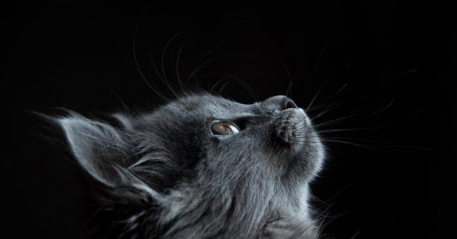 Всеки, който има котка или куче, е забелязвал понякога как
