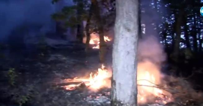 Снимка: Пожарът в Благоевградско стигна близко село