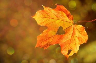 Есента пристига със слънце