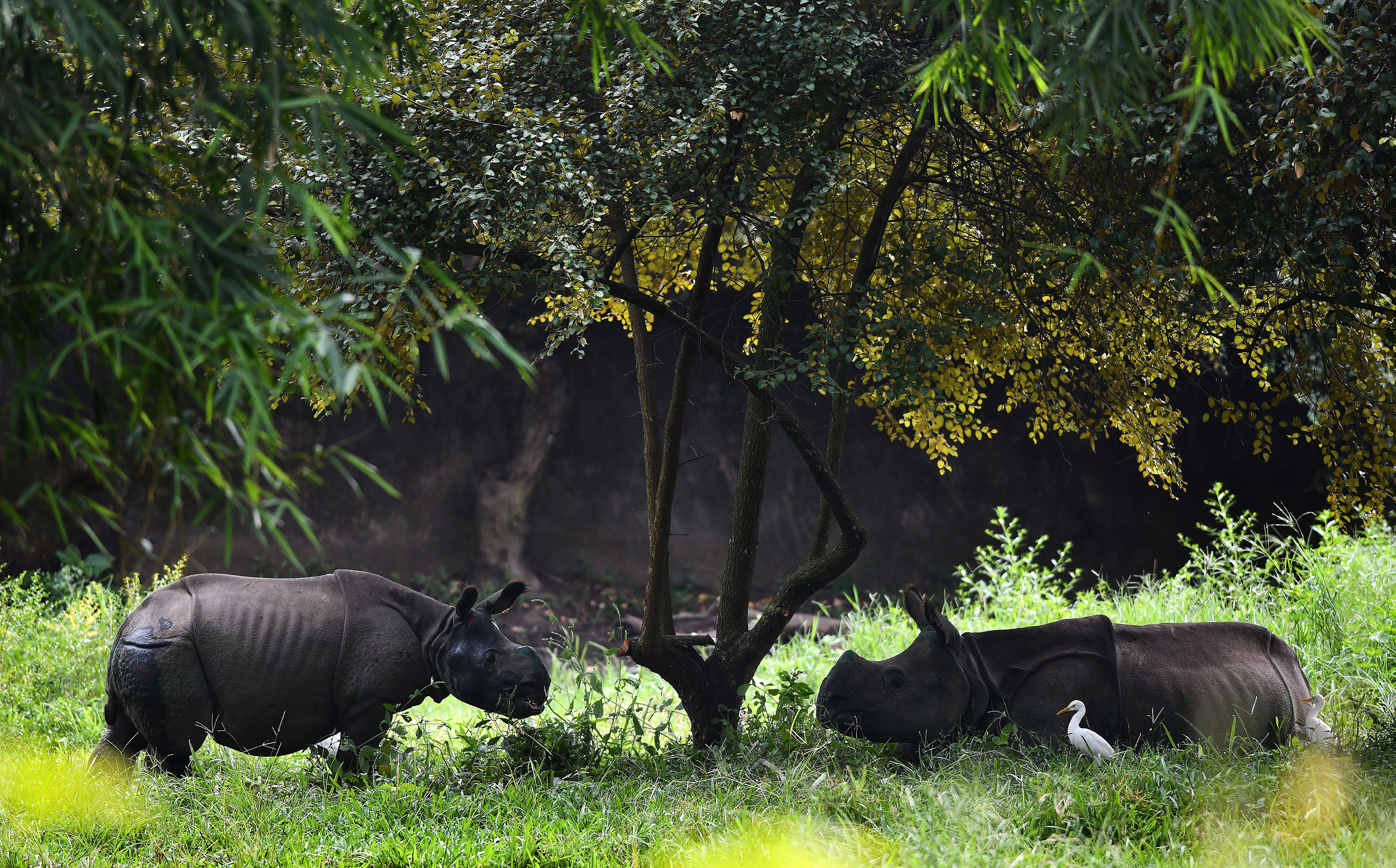 """Националният парк """"Казирганга"""" в Асам, Индия"""