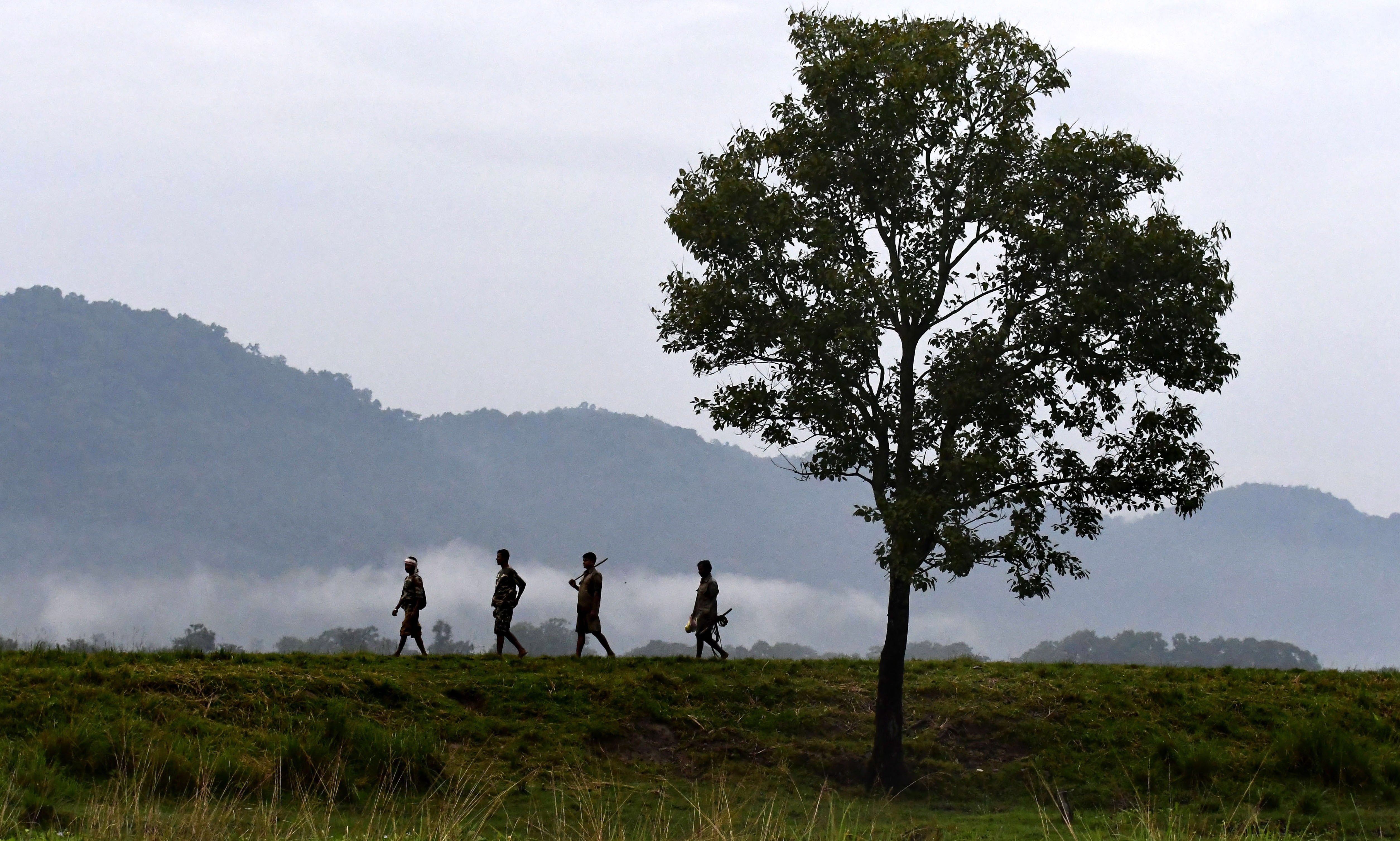 В Казиранга доминират саваните и редките горски формации и алувиалните гори.