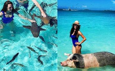 Златно момиче плува сред акули и прасета