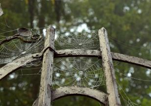 Разкриха защо паяжината е толкова здрава