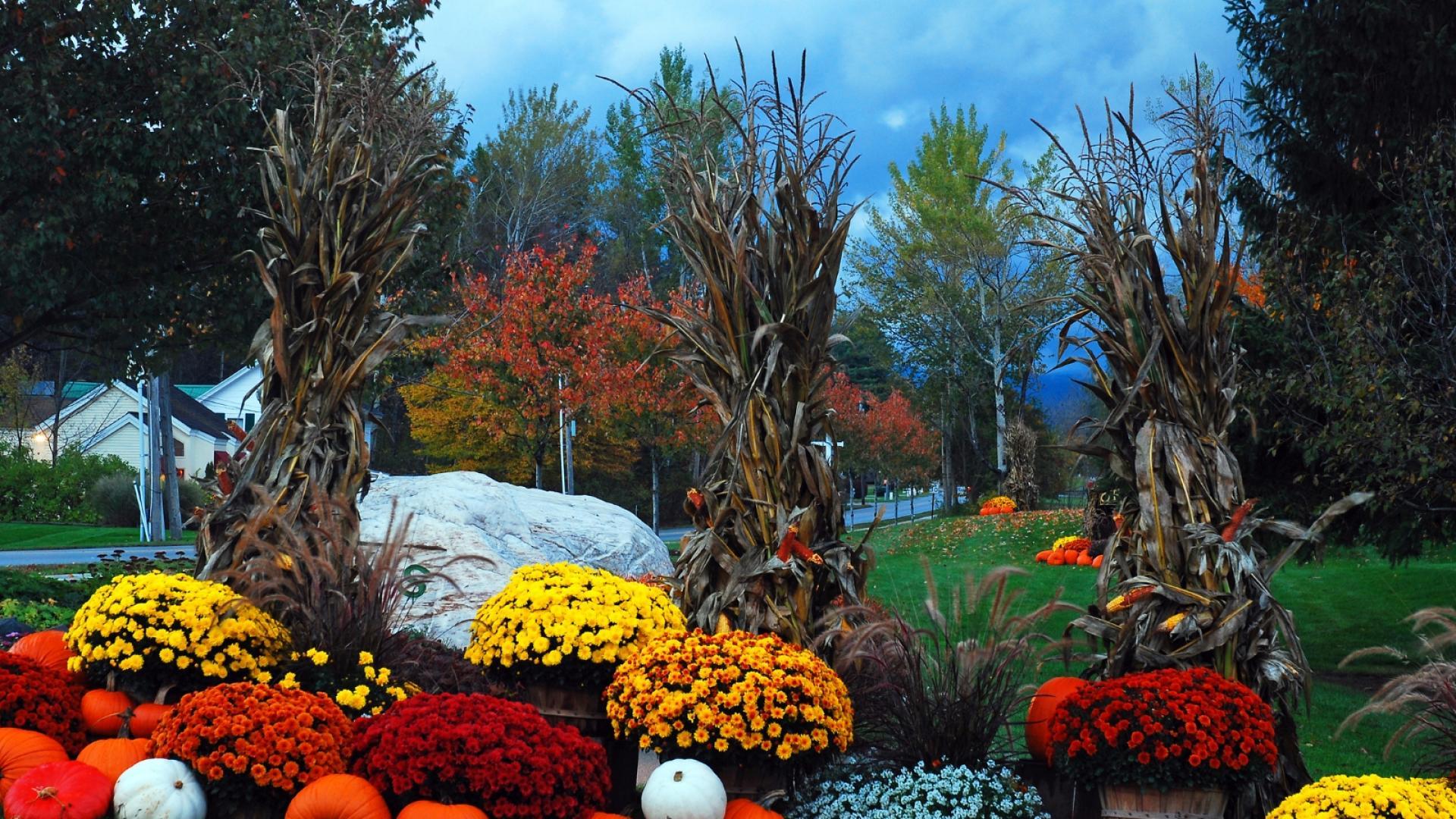 Кои растения да засадим през есента (СНИМКИ)