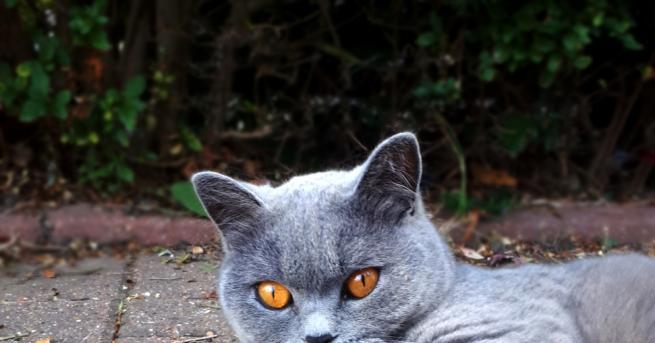 Начало Как да се включа Вдъхновените Котките на София -