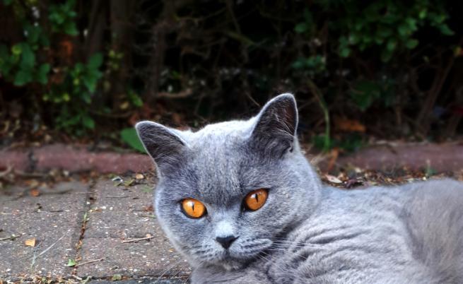 Котките на София - пред нас в цялата си прелест