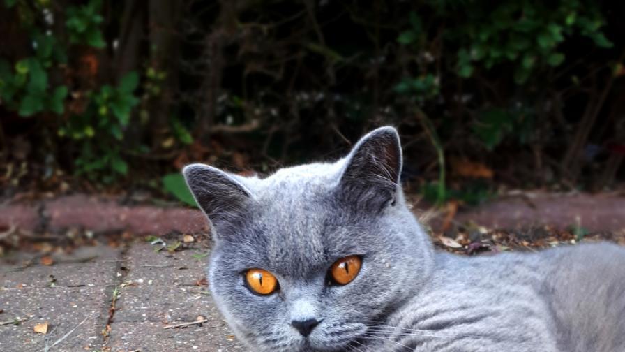 <p>Котките на София - пред нас в цялата си прелест</p>