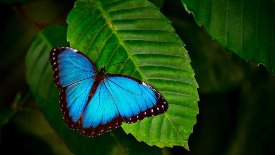 Каква тайна се крие зад синия цвят в природата