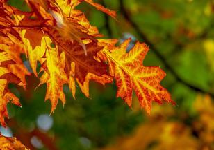 Уханието на есента