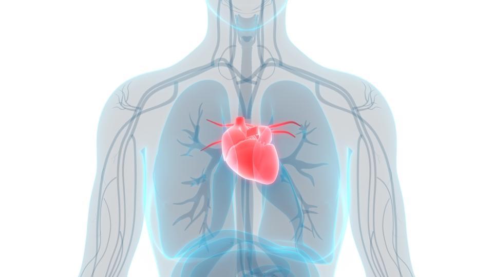 <p>Здравецът се използва широко при <strong>проблеми с кръвното налягане</strong>, тъй като той успява да го понижи и да успокои сърдечния ритъм.</p>