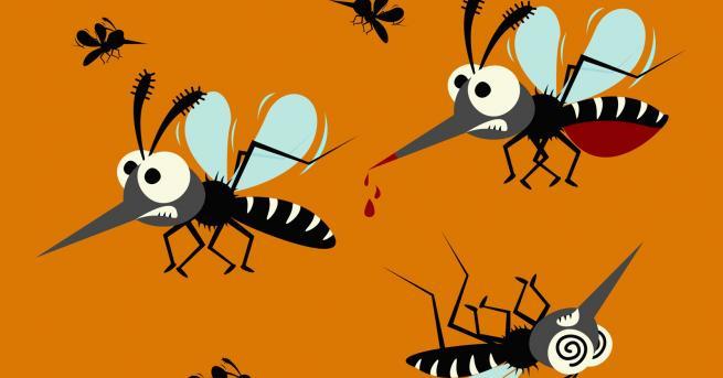 Любопитно Комари: Какво не знаем за тях Вижте защо само