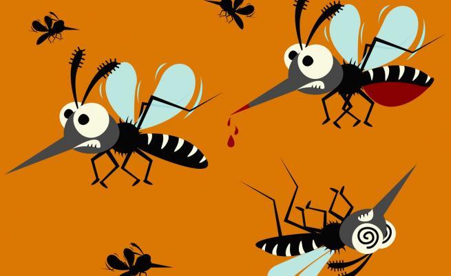 Какво ще се случи, ако всички комари на Земята умрат