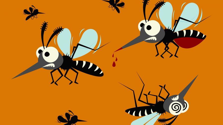 Комари: Какво не знаем за тях
