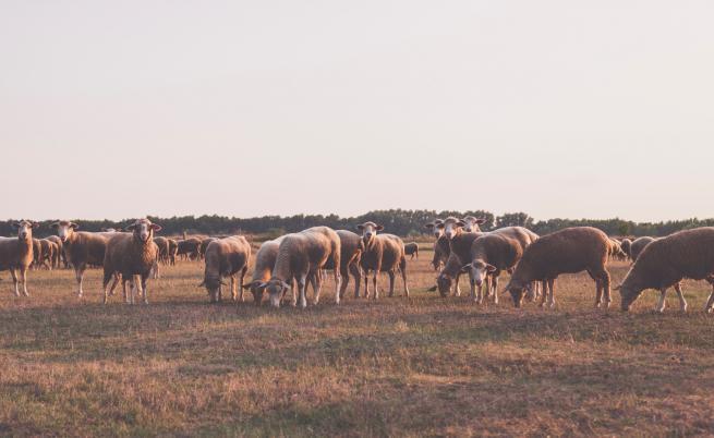 Нова болест мори животни в Румъния