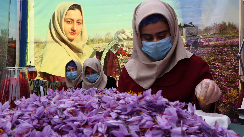 Афганистански жени сортират цветовете на шафрановия минзухар в Херат, Афганистан.