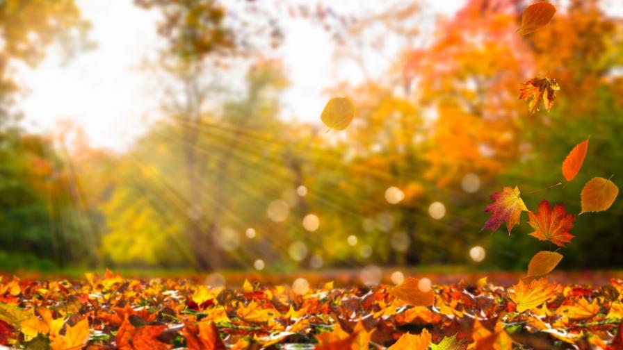 Ето ги разгаданите тайни на есента