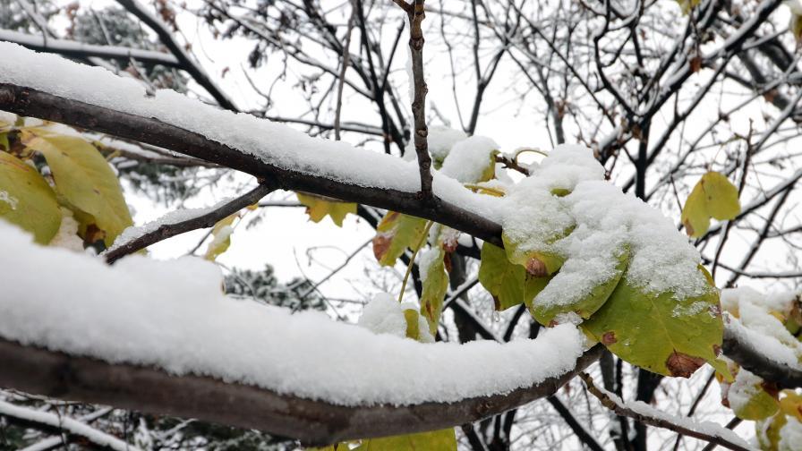 Идва сняг, меко време през уикенда