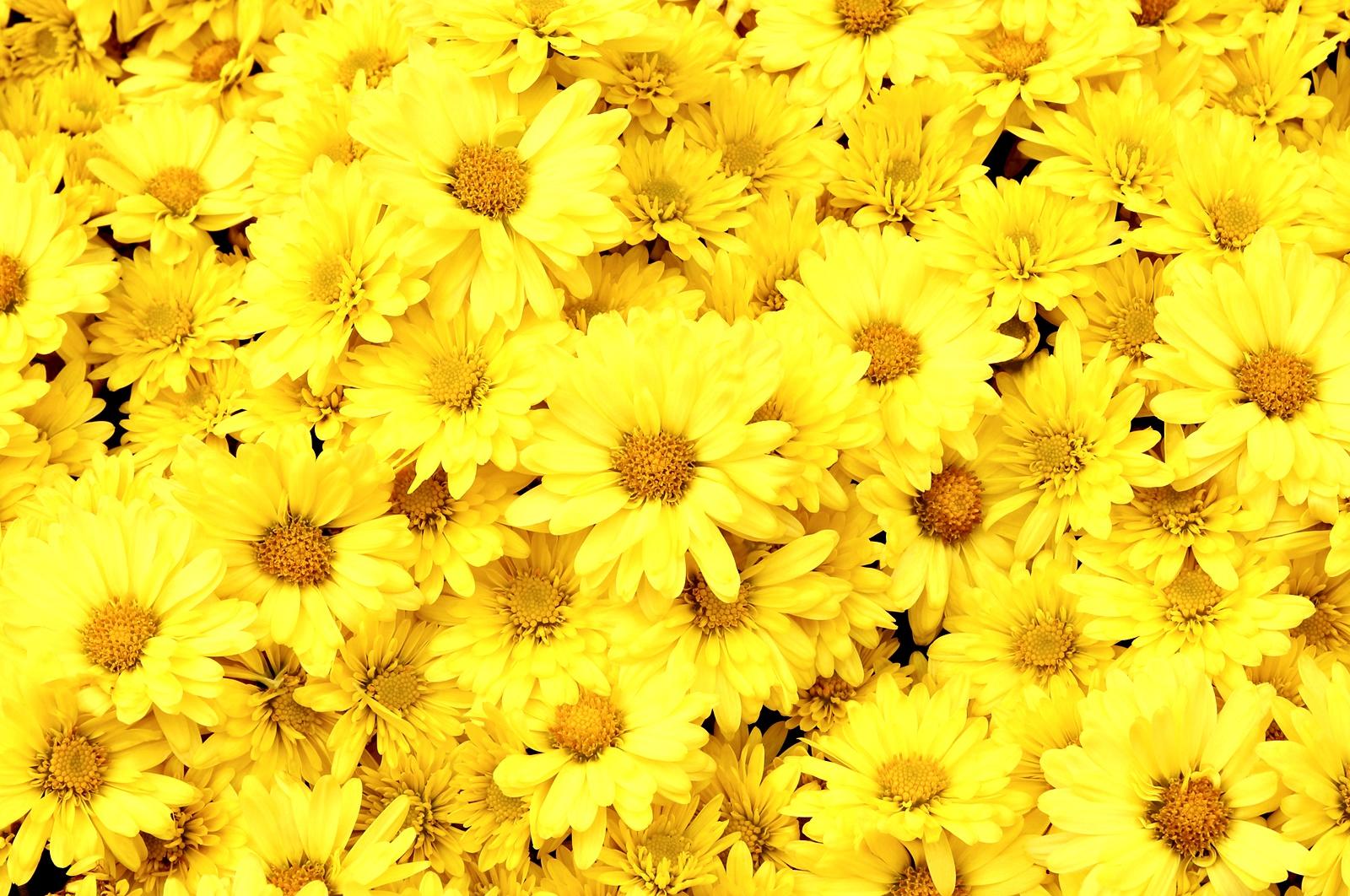 """Жълто<br /> Докато обичайно жълтото се свързва с енергия и щастие, във Франция то носи смисъла на завист и предателство. В Китай всичко порнографско е считано за """"жълто"""", а в Африка и Тайланд жълтото е символ на висок социален или кралски статус."""