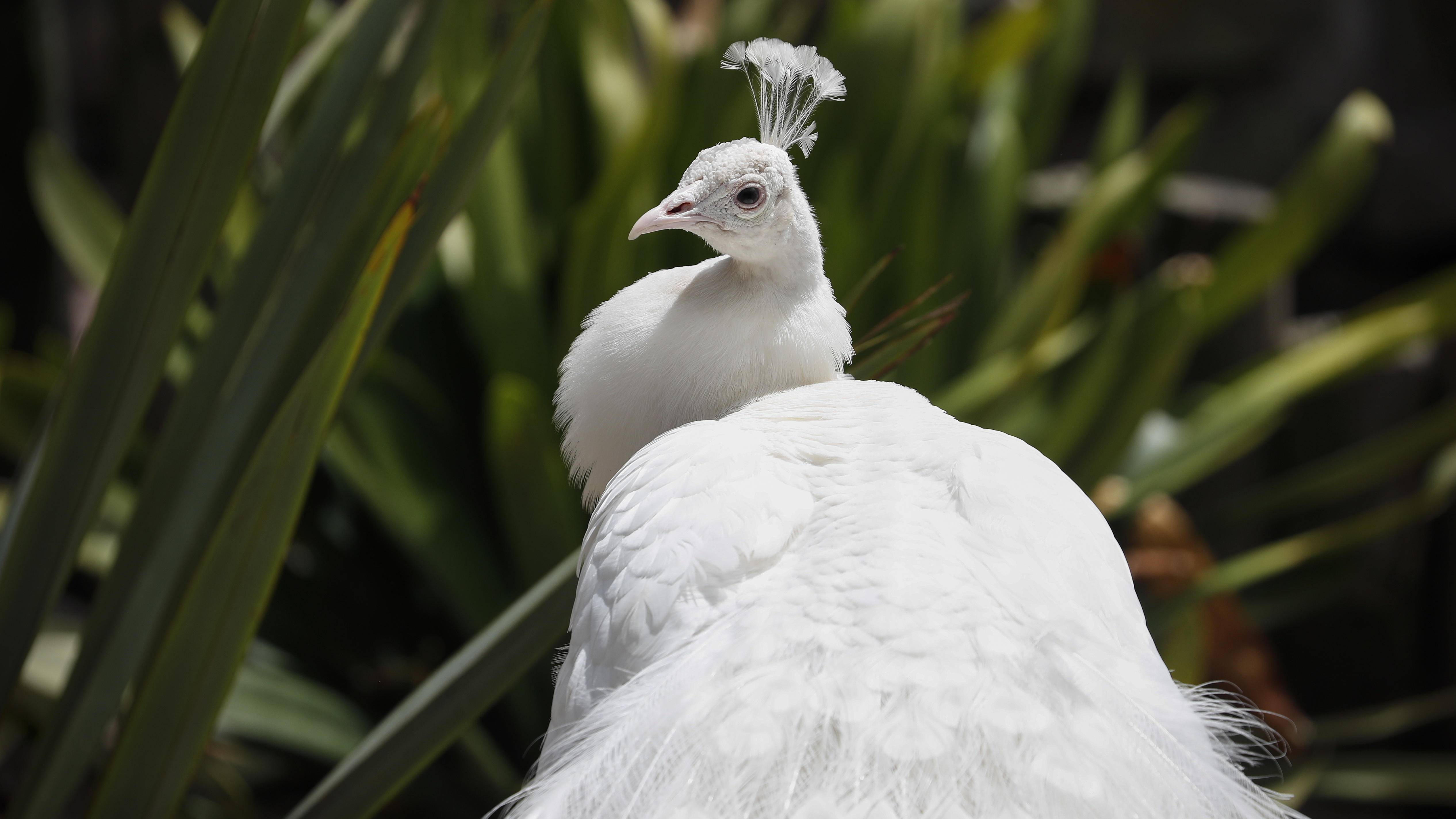 """Резерват за дива природа """"Светът на птиците"""" е зоопарк в Хаут Бей, предградие на Кейптаун, Република Южна Африка. На площ от 4 хектара са представени около 3000 екземпляра, спадащи към 400 животински вида в колекцията, от които около 330 са видове птици."""