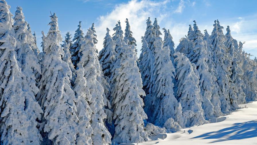 Снегът остави десетки селища без ток