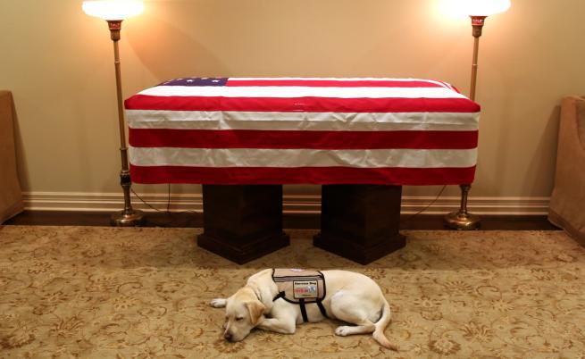 Заедно до последния миг: кучето на Буш-старши лежи до ковчега му